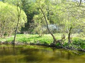 řeka Moravská Dyje tvoří hranici pozemku