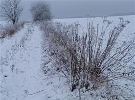 Zimní cesta ze Studené na Bukovici I.