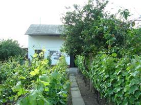 Pohled na chalupu z vinohradu