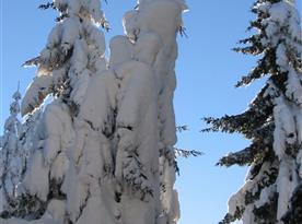 Zima na Bukové hoře