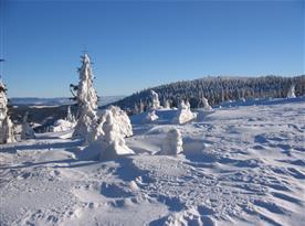 Jasné zimní dny na Bukové hoře - 4 km na běžkách od Horského domečku : )