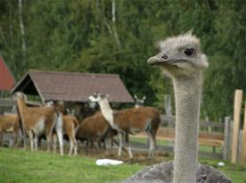 Zoologická zahrada přímo v areálu potěší především malé návštěvníky
