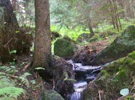 Okolní příroda