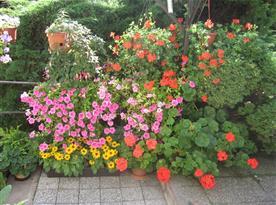 Krása léta na rozkvetlé zahradě