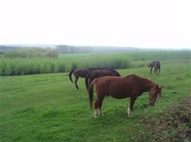 Výběh pro koně v Paní hájích