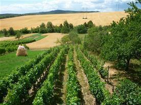 Překrásný výhled z chaty na okolní vinohrady