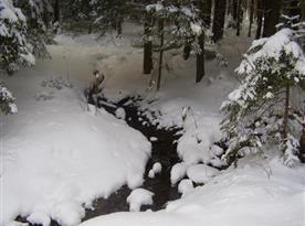 Okolní příroda v zimě