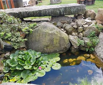 Zahradní jezírko, které obývají dvě žabky