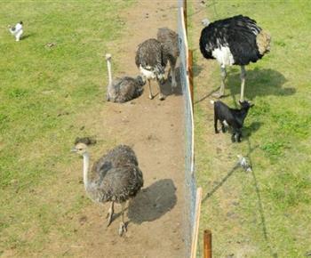 Farma se zvířaty ve volném výběhu