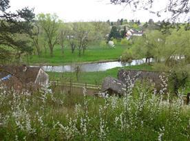 Pohled na naše pozemky z protilehlého břehu řeky Moravská Dyje