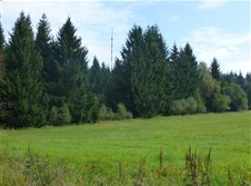 Pohled na Javořici ze Světlé - Nejvyšší hora celé Českomoravské vrchoviny 837m.