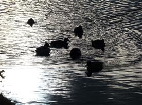 Zimní rybníky v okolí Studené