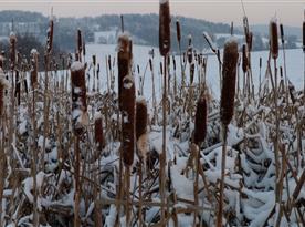 Zima v okolí Studené  - Krása je skryta za každým doutníkem