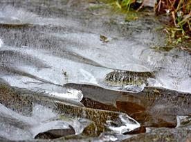 Mráz ve Studené kouzlí v ledu 01/2015 - Okolí Cyklopenzionu