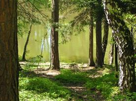 Rybník u chaty