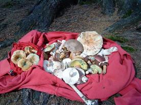 Okolí ráj pro houbaře