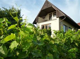 Chata obklopena vinohradem
