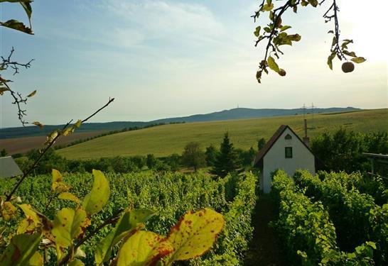Chata Uprostřed vinohradu