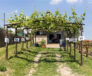 Vinný sklep U Šabatů